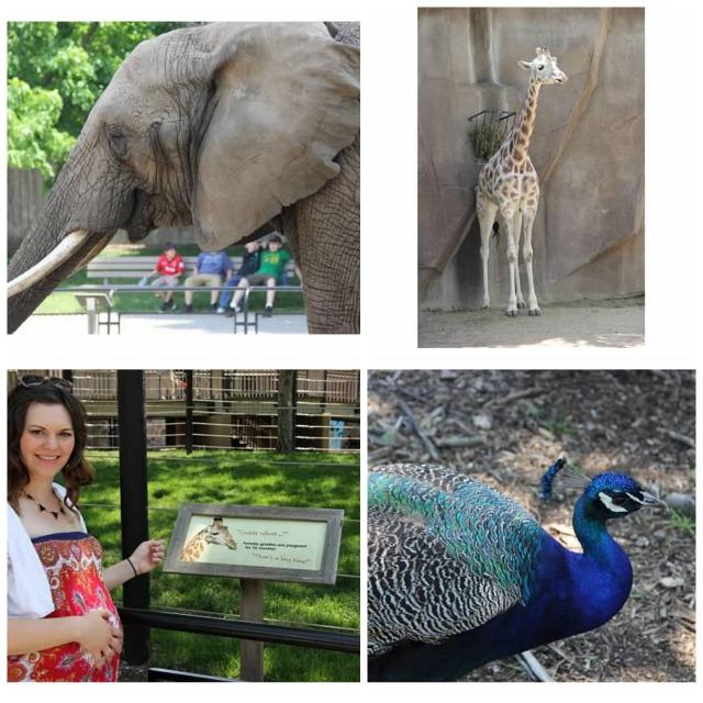 zoo fun.jpg